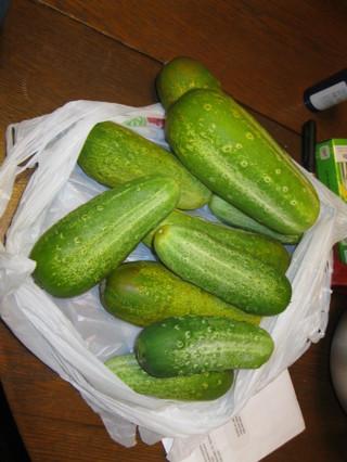 10+ Cucumber Seeds