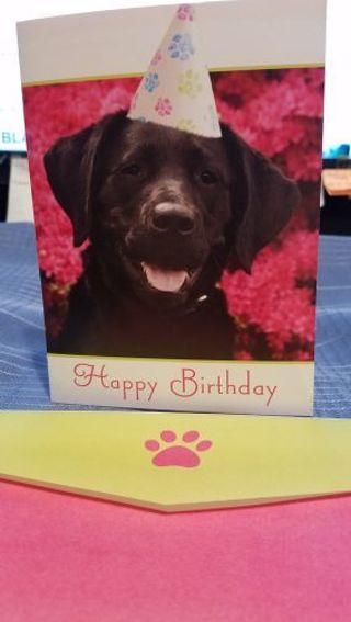 ADORABLE BLACK LAB WISHING YOU A HAPPY BIRTHDAY CARD W/ MATCHING ENVELOPE