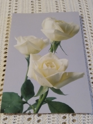 Greeting Cards - Roses