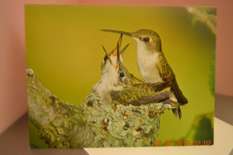 "****""MOTHER HUMMINGBIRD FEEDING HER YOUNG"" BLANK CARD W/ENVELOPE***FREE SHIPPING"