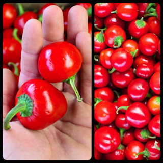 Pepper - Hot Red Cherry - 20 Seeds - Organically Grown and Hand Harvested