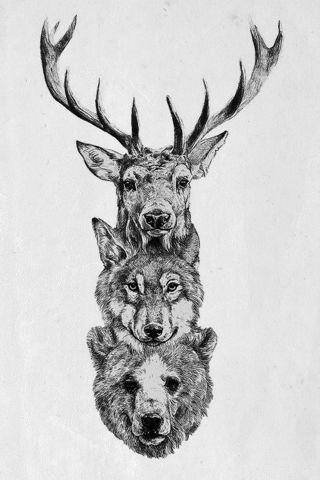Free Deer Wolf Bear Wallpaper Photography Listia Com Auctions