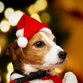 [GIN FOR FREE SHIPPING] Santa Hat Christmas Cat Dog Winter Warm