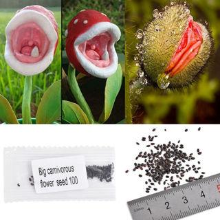 Free 100pcs Garden Novelty Rare Insects Catch Sorceress Carnivorous Bonsai Seeds Gardening Seeds Bulbs Listia Com Auctions For Free Stuff