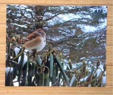 8X10 Bird Original Photo