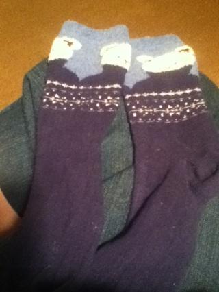 Girls teddy bear socks