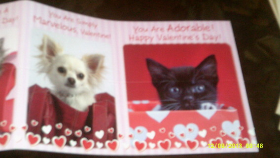 Adorable Kitty & Puppy Valentines Day Cards