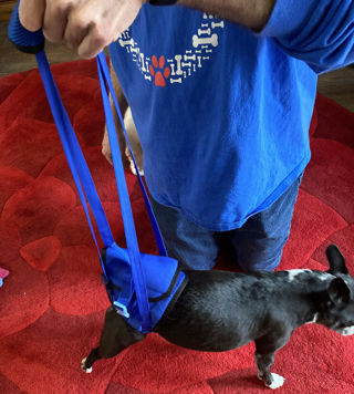 High Quality Dog Walking Lifting Carry Support Harness Assist Injured Disabled