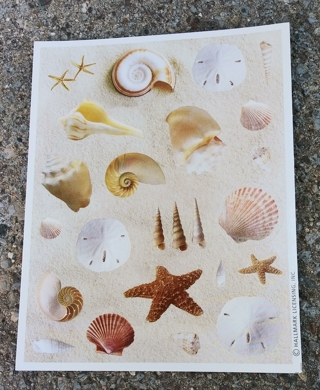 SEA SHELLS SAND DOLLAR STICKERS 2 SHEETS