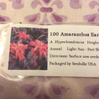 100 Amaranthus Early Splendor Seeds