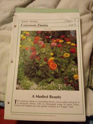 Common Zinnia plus bonus flower seeds