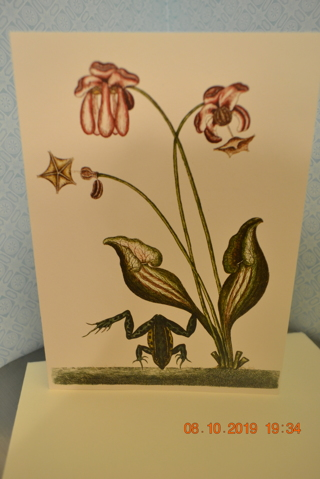 ****THE WATER FROG BLANK CARD W/ENVELOPE***FREE SHIPPING