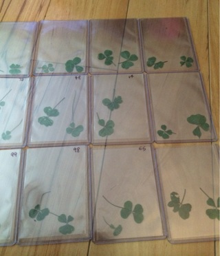 REAL RARE LUCKY FOUR LEAF CLOVERS!!!