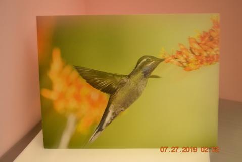 ****#2 HUMMINGBIRD IN FLIGHT BLANK CARD W/ENVELOPE***FREE SHIPPING