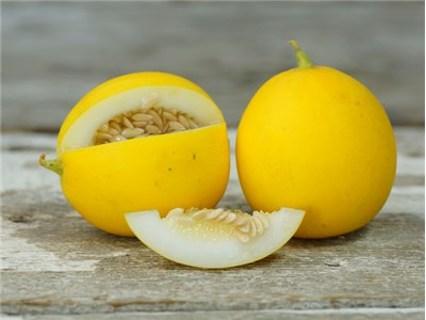 Mango Melon (Vine Peach) vining peach