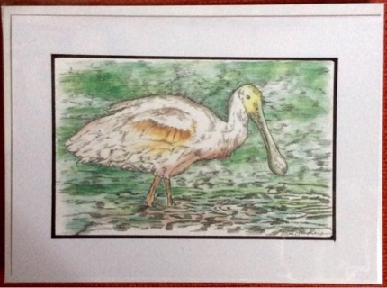 "ROSETTA SPOONBILL - 5 x 7"" art card by artist Nina Struthers - GIN ONLY"