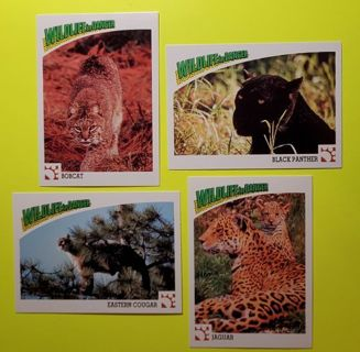 4 Wildlife Cards! Cats!
