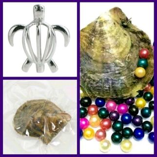 1 oyster with pearl turtle necklace pendant