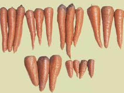 Carrot Collection 2