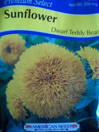 Dwarf Teddy Bear seeds