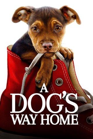 A Dog's Way Home HDX DIGITAL CODE