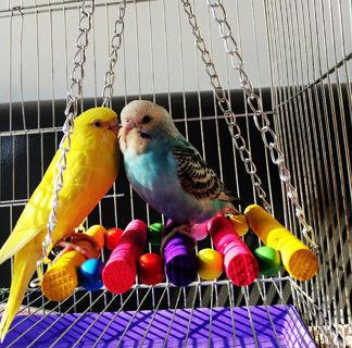 [GIN FOR FREE SHIPPING] Bird Parrot Hammock Swing Toys Hanging