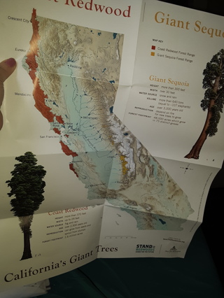 California Giant Tree Map Poster