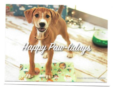 Christmas Card With Envelope with Dog