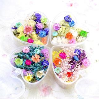 Mixed Dried Flowers Nail Art DIY Bottle Decoration Preserved Flower Decoration