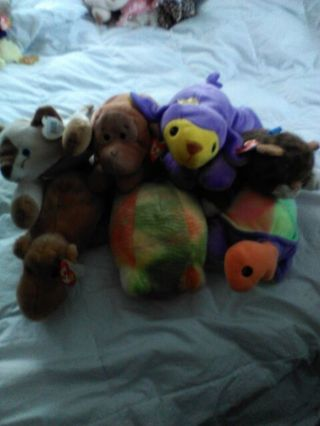 Beanie Babies Pillow Pals and Buddies