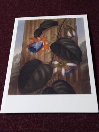 Greeting Card - THE WINGED PASSION FLOWER