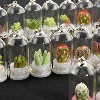 Mini Cactus Miniature Succulent Cacti Terrarium Wearable Necklace Live Plant EY