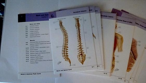 Anatomy Flash Cards Back & Spine