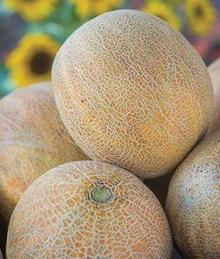 Ambrosia Melon--7-10 seeds